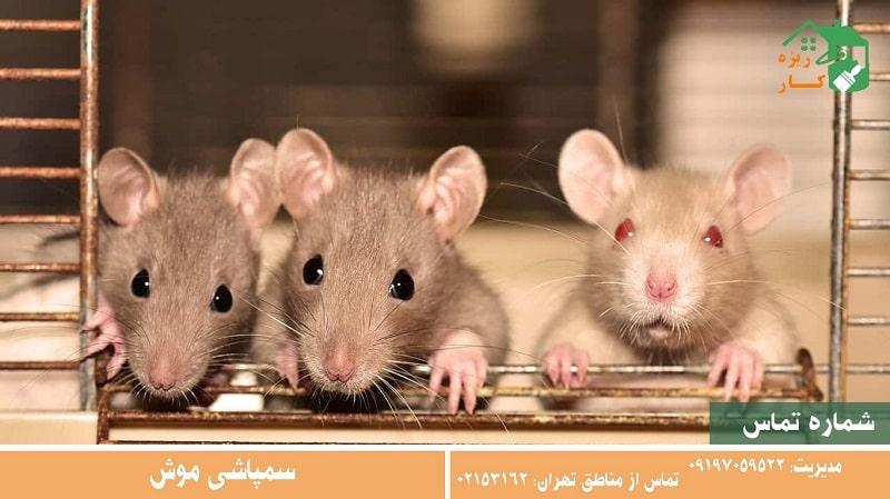 تعرفه سمپاشی موش