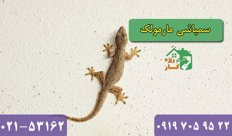 سمپاشی مارمولک تهران