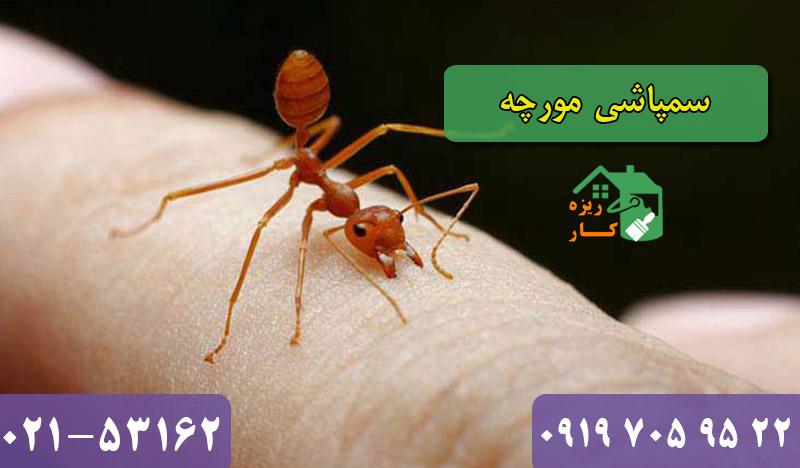 سمپاشی مورچه تضمینی