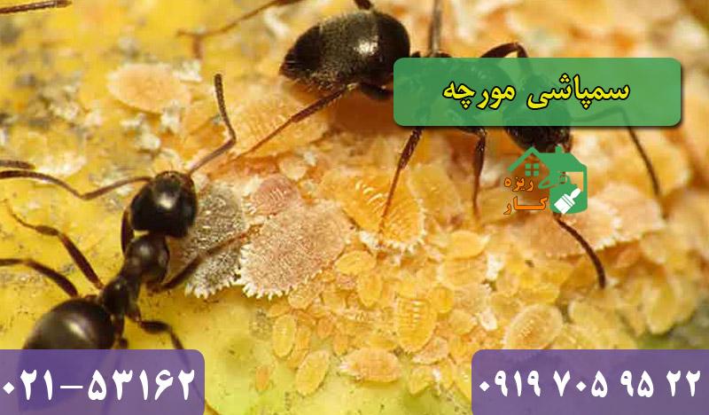 سمپاشی مورچه تهران