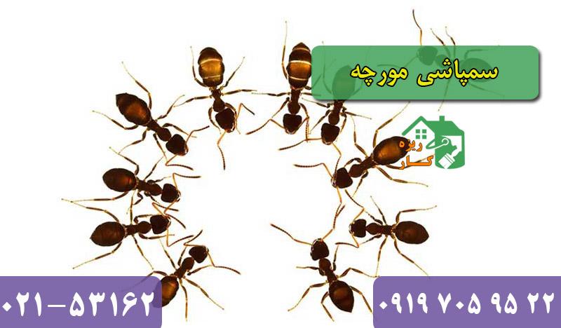 شرکت سمپاشی مورچه تضمینی