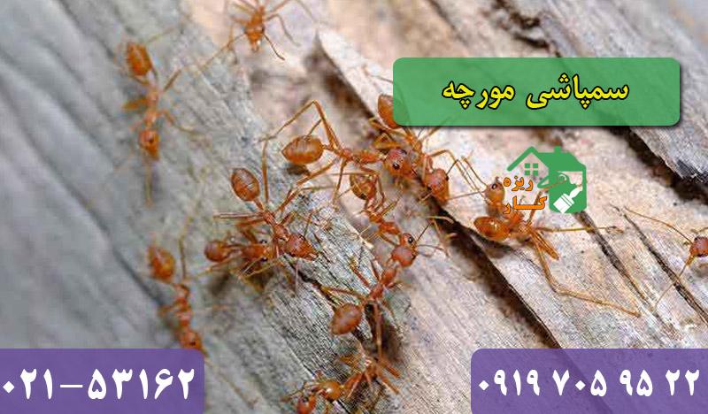 شرکت سمپاشی مورچه